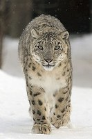 Getting Ready for Snow Leopard